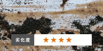 コケ・カビ・藻が発生:劣化度4